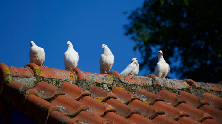 What To Look For In Roof Repair Specialists